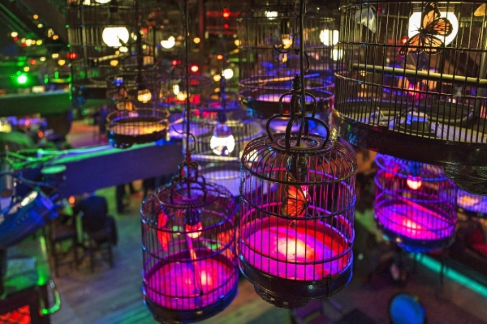 Custom Made Bird Cage - Pendant Lights